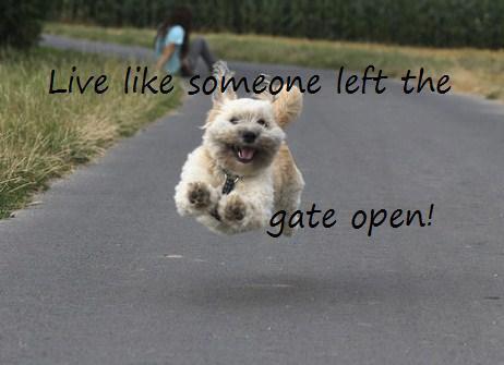 live-life-dog