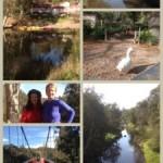 Yarra Bend Park & Dights Falls Walk