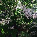 Flowers on Camino de Santiago