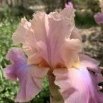 Spring Colour in the Garden