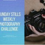 Photo Challenge – Fallen #SundayStills